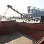 Экспорт зерна через морские порты Краснодарского края в январе-октябре увеличился почти вдвое
