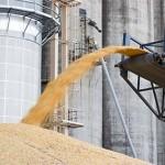 В Новороссийском порту стартовала реализация работ по принципу «Одного окна» для экспорта зерна и продуктов его переработки